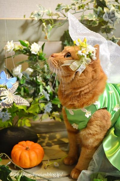 Happy Halloween!  Handmade Cat Costume : お茶の時間にしましょうか-キャロ&ローラのちいさなまいにち- Caroline & Laura's tea break
