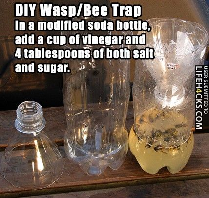 DIY: Wasp/Bee Trap - #DIY, #LifeHack