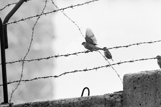 © Paul Schutzer, Jan. 1962, Birds on barbed wire strung atop the Berlin Wall Find more pictures of the Berlin Wall here.