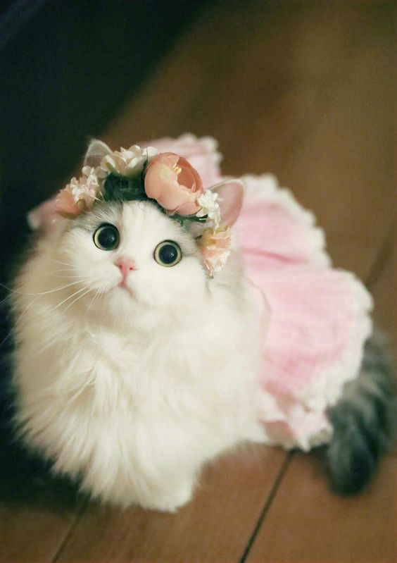 Beautiful Ballerina Cute Cats Kittens Cute Cats Cats Kittens