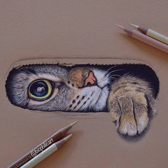 15 Amazing 3d Drawings That Will Blow Your Mind Animal Drawings Cat Drawing 3d Drawings