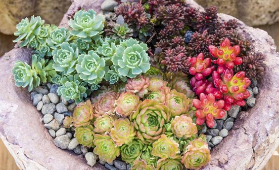 Für einen kleinen Steingarten im Topf ist auch auf dem Balkon Platz
