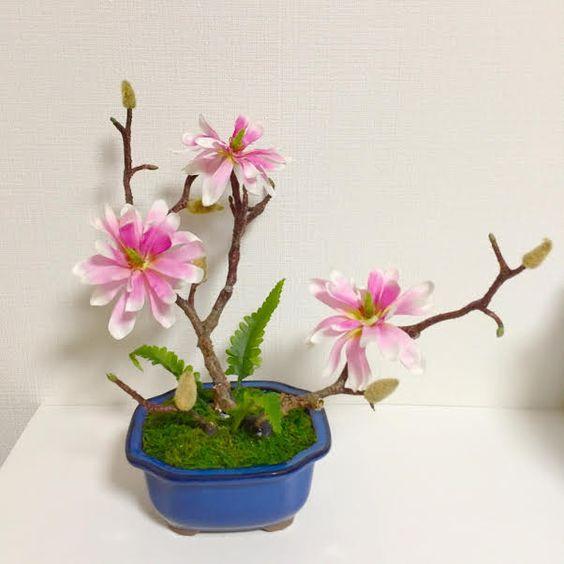 BONSAI ART JAPAN 「コブシ」 https://www.facebook.com/bonsaiartjapan/