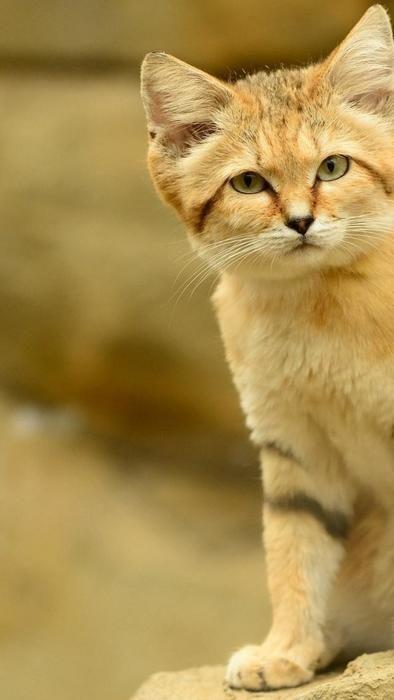 9 kittens pics | Funny Kittens PICs