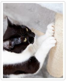 Is your cat scratching up your favorite furniture or rug? Solve the issue with a scratching post. Click the image for more on scratching posts.