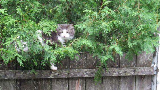 Mon chat en mode chasse!