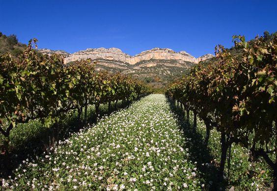 Les vignes. Location villa Costa Dorada