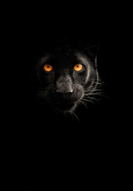 #black #panther, photo by Mike Shaw