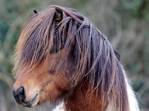 Gisli Islandpferdehof Niederrhein Islandpferde Pony Pferd Pferde