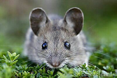 Cute mouse:
