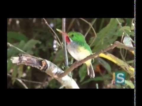Geoambiente con María Falcón - Las aves de Puerto Rico - Parte I