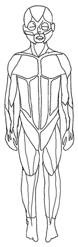 It is a photo of Impertinent Muscular System Coloring Book