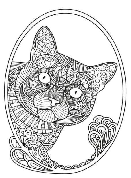 Pin De Fer Ferreira Em Colorir Animais Para Colorir Desenhos