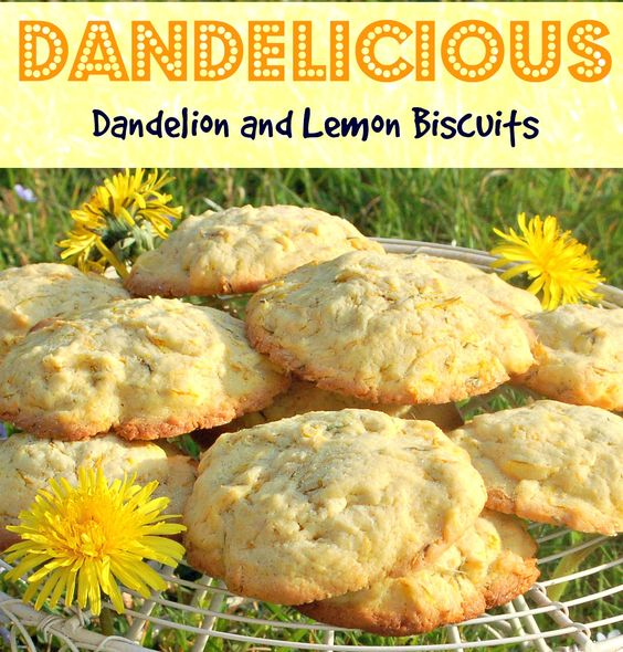 Dandelion & Lemon Biscuits | Craft Invaders. Wonderful recipe using Dandelion Flower petals - great fun for kids to make teaches them about the idea of edible weeds starting with a plant that we can all identify