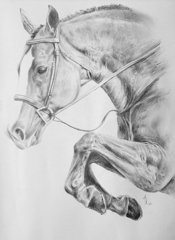 Horse Pencil Drawing Fine Art Print