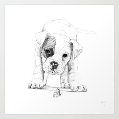 Easy Boxer Dog Drawings Www Picturesso Com