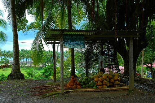 Photo Gallery: Playa Dominical & Drake Bay, Costa Rica: Playa Dominical Photos: Cocos for Purchase!
