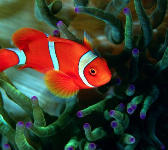 Coral Reef Plants Names