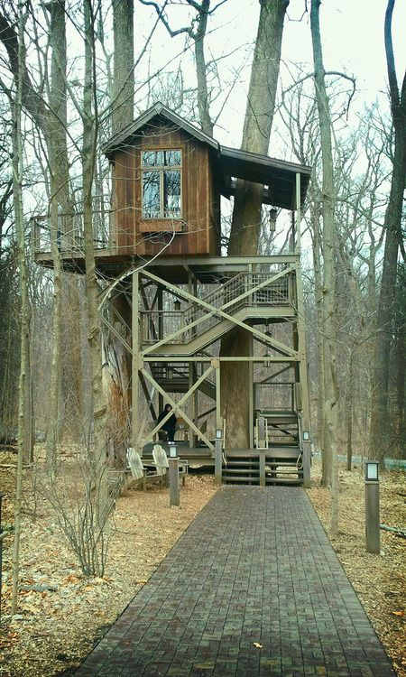 Awesome A Beautiful Tree House With A Fancy Terrace Rising Nearly 20 Feet