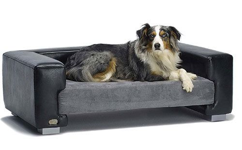 Dog Bed Furniture Dog Beds At Amazon Co Uk Low Prices On Dog Beds Free Uk Delivery On Bestpriceondogbeds Cool Dog Beds Dog Furniture Leather Dog Bed