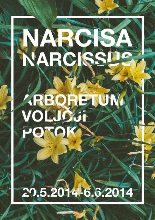 Flower Poster Mark Prelec