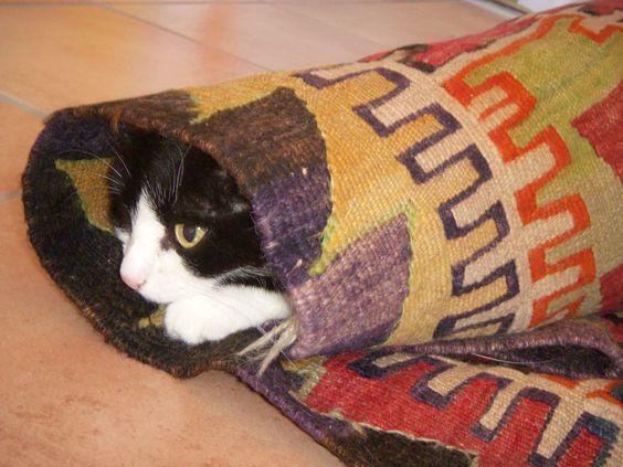 Roll - Katze: Laura im Teppich