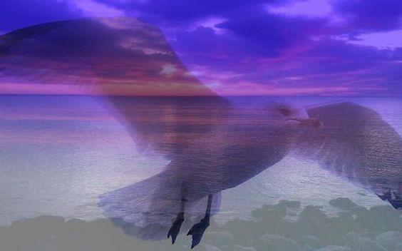 """""""Love is the only real Freedom .....Kahlil Gibra"""" taken by Denise in Narragansett  http://tinyurl.com/79oyylt"""