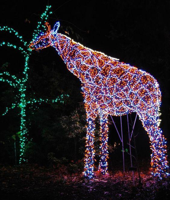 Pin By Kim Murphy On Christmassy Christmas Light Displays Christmas In America Holiday Lights