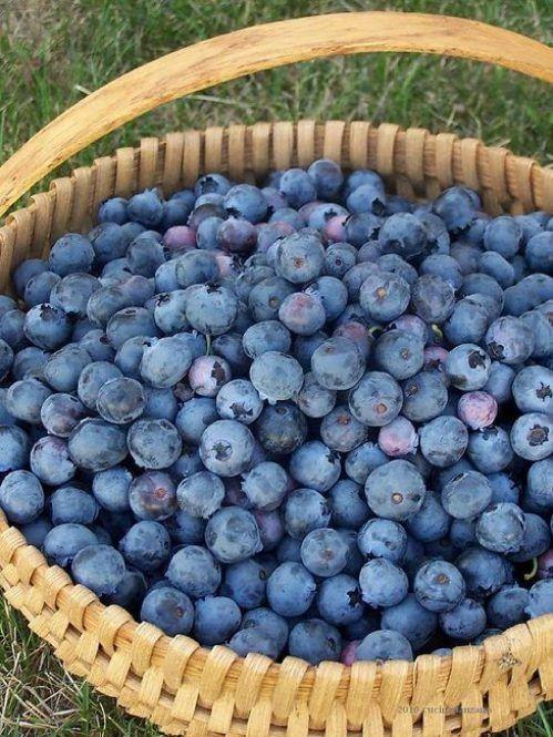 blueberries!! Yummmm.....