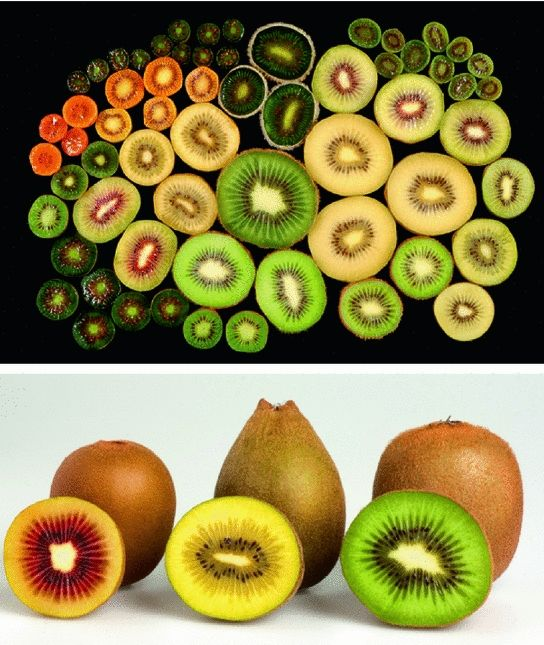 Polyploid Actinidia Google Search Fruit Google Search Food
