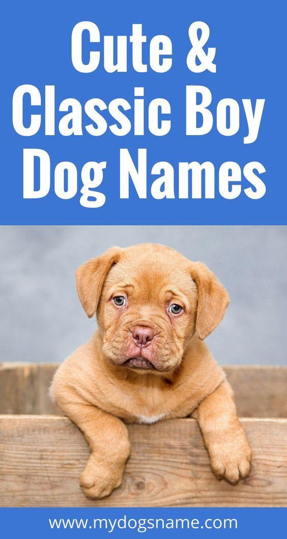 Boy Dog Names Boy Dog Names Cool Dog Names Boys Boy Puppy Names