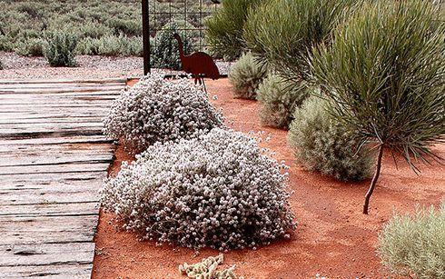 Desert Plants At The Australian Arid Lands Botanical Garden In Port Augusta Sou Shade Garden Australian Native Garden Native Garden