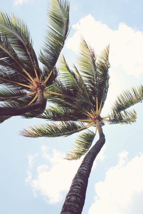 #palm #nature #freedom
