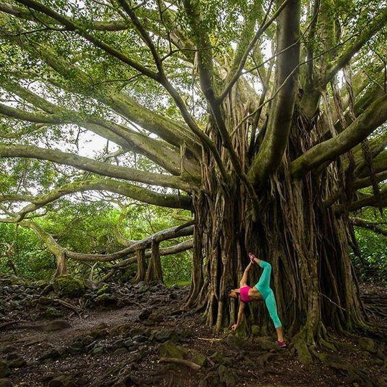 camleeyoga - This beautiful tree <3: