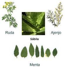 Plantas medicinales con sus nombres buscar con google - Clases de flores y sus nombres ...
