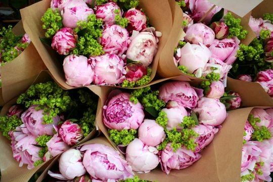 Nuestras flores favoritas, peonías ♥