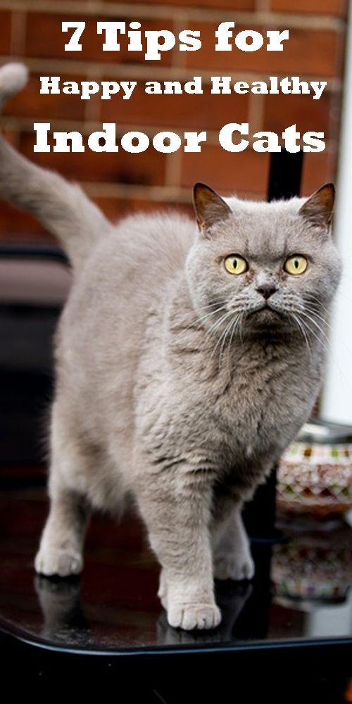 7 Tips For Happy And Healthy Indoor Cats Pooch N Cat Indoor Cat Cats Cat Mom