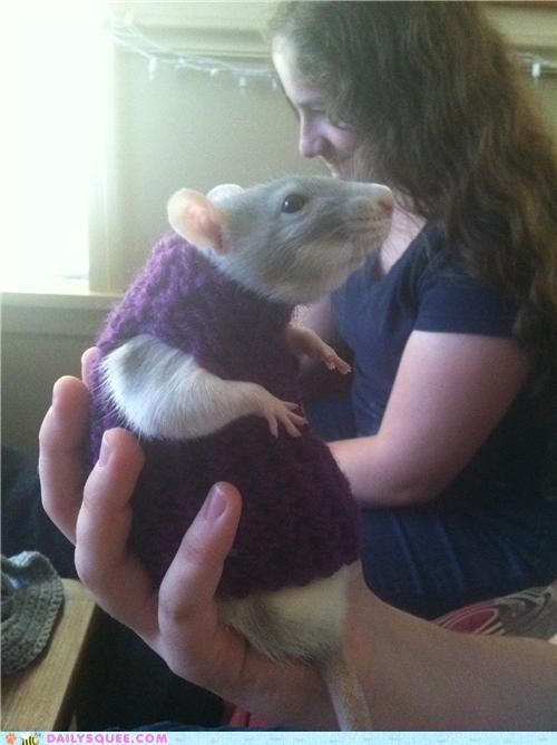 Rat sweater!  See Mom you can do it!
