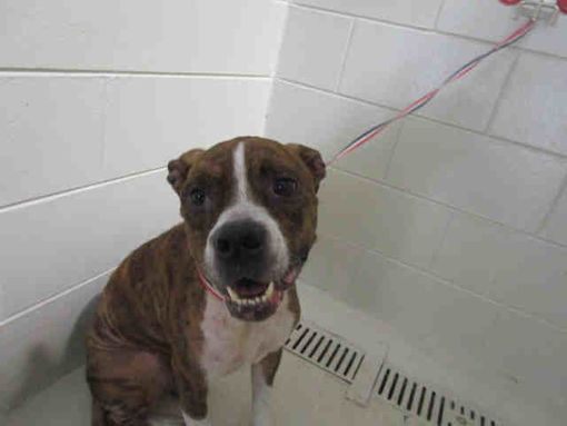 Winter Haven Fl Boxer Meet Mary A Pet For Adoption Winter