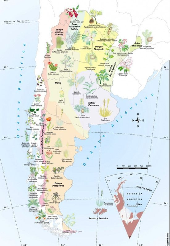 Flora De La Argentina Buscar Con Google China China Mapa