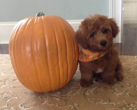 Getting into the fall spirit!
