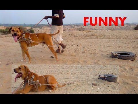 Funny Dog Video Dog Video Compilation Best Trained Dog 2018