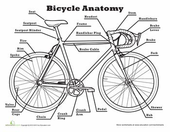 Anatomy of a Bicycle | Anatomy, Bicycles and Worksheets