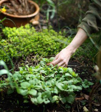 Boa tarde! Que tal colher umas ervinhas aromáticas do nosso próprio jardim para o almoço?