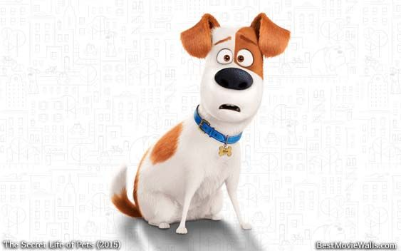 The Secret Life Of Pets Wallpaper: #Max Looks So Cute Here :} What Does Your Pet Do When You