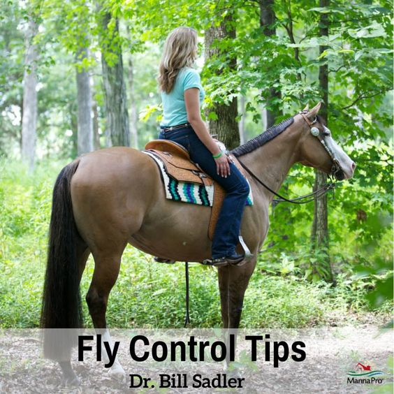 Fight flies with Force this summer with these horse fly control tips from Dr. Bill Sadler.