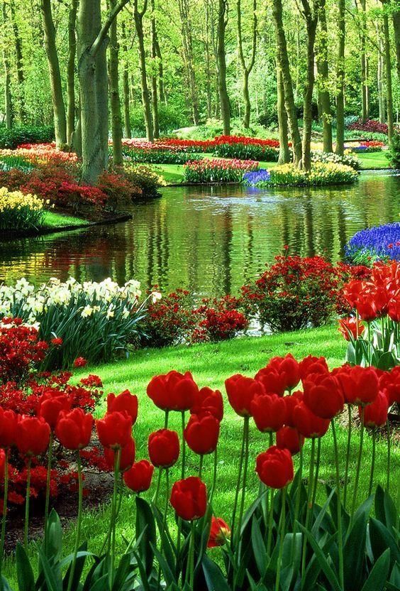 Bunga Tulip Indah Warnawarni Pokeronline Agenpoker Gbkpoker Taman Indah Pemandangan Kebun