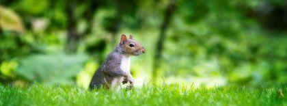 Curious Squirrel Facebook Covers