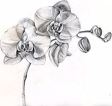 Black And White Orchid Tattoos Designs Orchid Tattoo Because Aquarius Is My Moon Sign And It S Flower Is Orchids And I Lo Orchid Drawing Orchid Tattoo Orchids