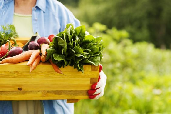 Yet another study confirms the holistic approach to health: Diet cures disease, NOT drugs